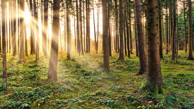 Sunburst in natural Forest - Fairytale Mood