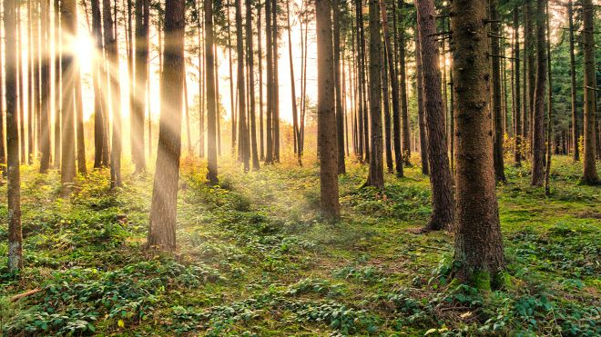 Sunburst in natural Forest - Fairytale Mood